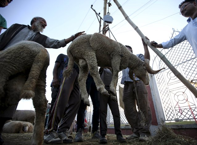 Kashmiri people weigh a sheep before selling it at a livestock market ahead of the Eid al-Adha festival in Srinagar September 23, 2015. (Photo by Danish Ismail/Reuters)