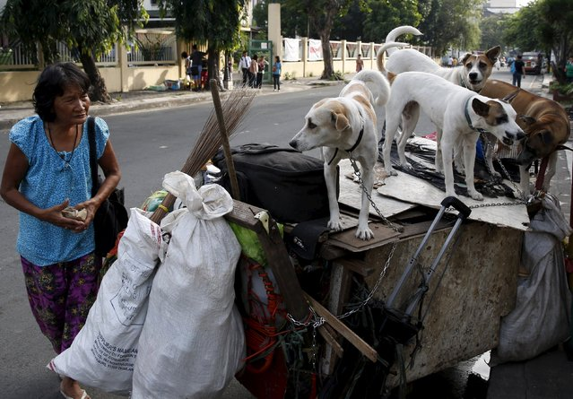 Homeless woman Elena Sevilla prepares to collect recyclable materials with her four pet dogs aboard her cart in Manila October 15, 2015. Sevilla, who lives in the cart with her pets said she earns her livelihood from collecting plastic bottles and other recyclable materials to buy food for herself,  four dogs and three cats. (Photo by Erik De Castro/Reuters)