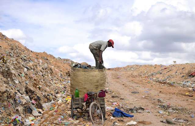 A rag picker prepares to pack a sack filled with recyclable materials, mounted on his tricycle at a garbage dump on the outskirts of the southern Indian city of Bangalore August 26, 2014. (Photo by Abhishek N. Chinnappa/Reuters)