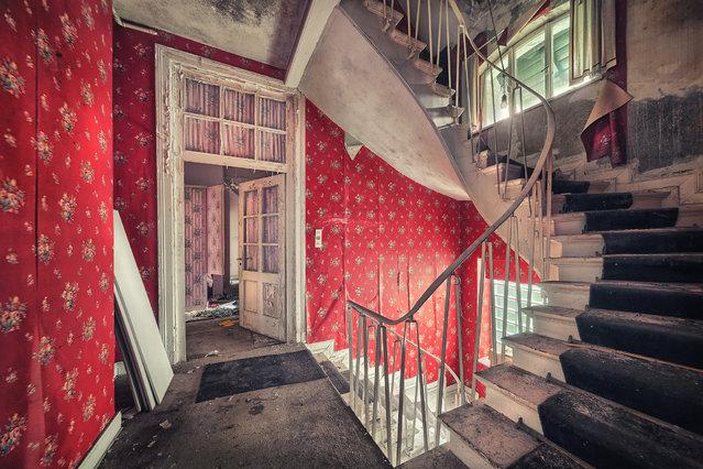 """Pretty in Red"". (Matthias Haker)"