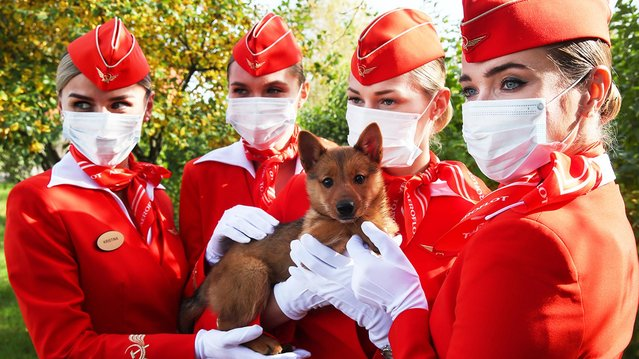 Aeroflot employees with a puppy at the canine service of Aeroflot at Sheremetyevo International Airport in Moscow Region, Russia on October 2, 2020, that has started to train service dogs to detect COVID-19 in people. (Photo by Vladimir Gerdo/TASS)