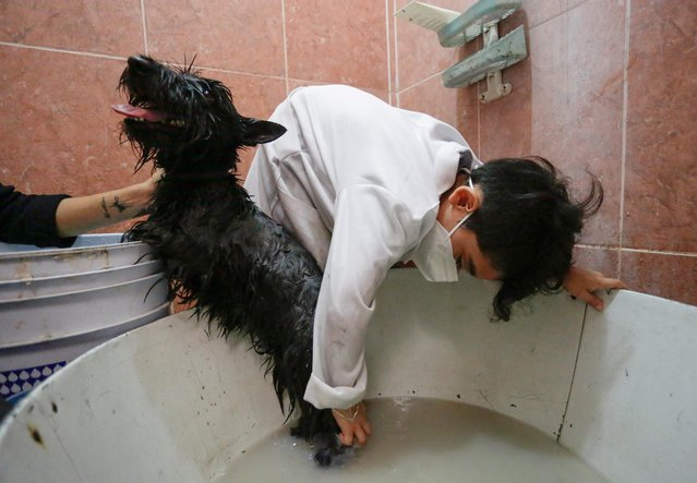 Jonathan Salas, 7, who bathes the pets for money to fund his plan for veterinary studies in the future, is pictured bathing a dog helped by his mother, at his home in Apodaca, on the outskirts of Monterrey, Mexico on March 14, 2021. (Photo by Daniel Becerril/Reuters)