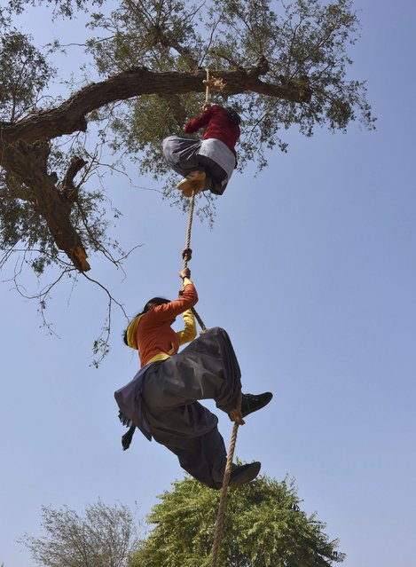 Students use a rope to climb up a tree during training a session at a fire and safety college in Sikar district in the India's desert state of Rajasthan February 9, 2015. Around 30 women were recently recruited from Rajasthan's towns and villages as part of an affirmative action policy to encourage women to join the fire service. (Photo by Reuters/Stringer)