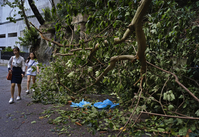 People walk past fallen trees caused by Typhoon Mangkhut outside a housing estate on the waterfront in Hong Kong, Monday, September 17, 2018. Hong Kong and southern China hunkered down as strong winds and heavy rain from Typhoon Mangkhut lash the densely populated coast. The biggest storm of the year left at least 28 dead from landslides and drownings as it sliced through the northern Philippines. (Photo by Vincent Yu/AP Photo)