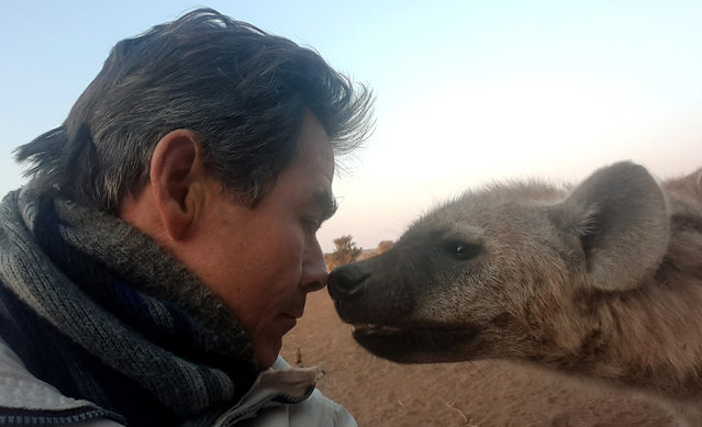 The adventurous explorers have snapped themselves in shark-infested waters, at the side of an active volcano, atop a Hong Kong skyscraper surrounded by toxic smog, and even perched on the top of iconic Rio statue of Christ the Redeemer. Here: Kim Wolhuters touching noses with a wild Hyena in the Mashatu Game Reserve in Botswana. (Photo by Kim Wolhuters/Caters News Agency)
