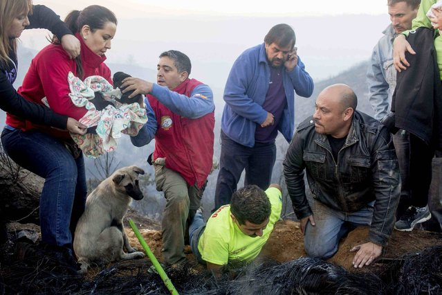 Volunteers rescue puppies during a forest fire in the hills of the port city of Valparaiso, March 14, 2015. (Photo by Pablo Sanhueza/Reuters)