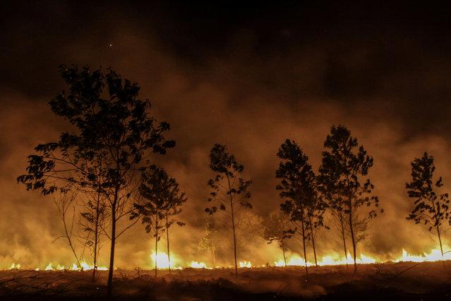 Trees burn during a fire in Pekanbaru, Indonesia Riau province, Indonesia, January 18, 2017. (Photo by Rony Muharrman/Reuters/Antara Foto)