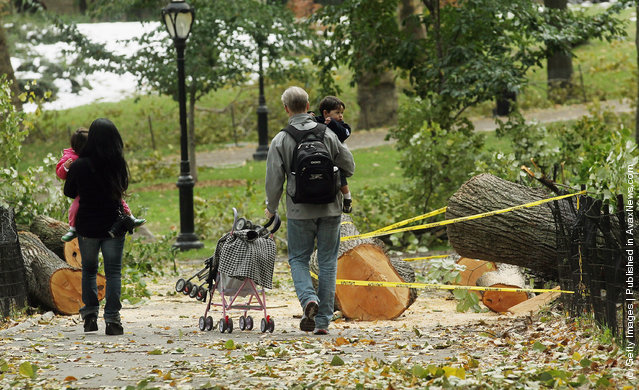 New York City Loses 1,000 Trees After Freak October Snowstorm