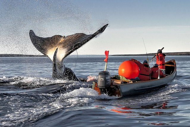 Giant tail emerges from the ocean within inches of a boat in Canada. (Photo by Sony World Photography Awards)