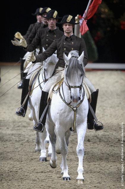 Spanish Riding School Of Vienna, white lipizzaner Stallion
