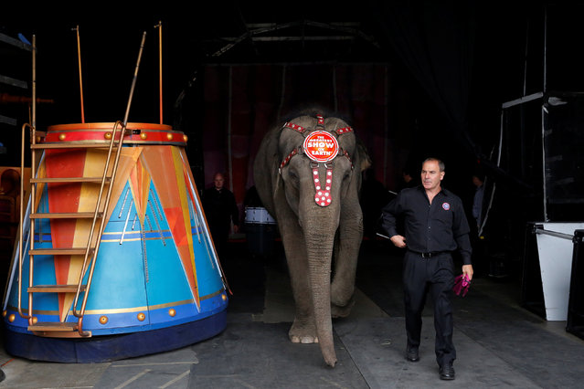 """Elephant Department Head Terry Frisco walks an elephant from a performance at Ringling Bros and Barnum & Bailey Circus' """"Circus Extreme"""" show at the Mohegan Sun Arena at Casey Plaza in Wilkes-Barre, Pennsylvania, U.S., April 30, 2016. (Photo by Andrew Kelly/Reuters)"""