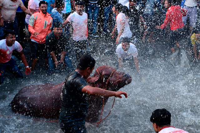 Nepali bystanders watch as other devotees splash water on a buffalo to be sacrificed during the ninth day of the Hindu Dashain Festival in Bhaktapur on the outskirts of Kathmandu on October 7, 2019. Dashain is the longest and the most auspicious festival in the Nepali calendar and celebrates the triumph of good over evil. (Photo by Prakash Mathema/AFP Photo)