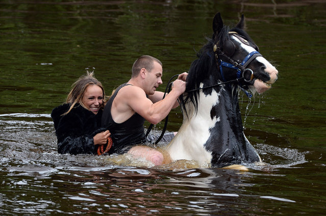 "Travellers ride their horse through the river during the Appleby Horse Fair on June 5, 2014 in Appleby, England. The Appleby Horse Fair has existed under the protection of a charter granted by James II since 1685 and is one of the key gathering points for the Romany, gypsy and traveling community. The fair is attended by about 5,000 travellers who come to buy and sell horses. The animals are washed and groomed before being ridden at high speed along the ""mad mile"" for the viewing of potential buyers. (Photo by Nigel Roddis/Getty Images)"