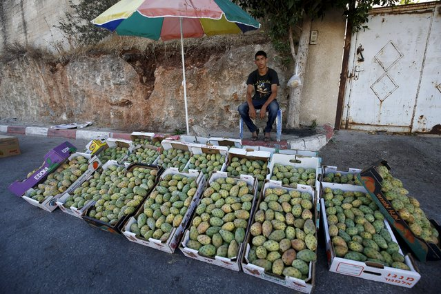 A Palestinian man sells cactus fruit in a field in the West Bank village of Nilin, near Ramallah, July 29, 2015. (Photo by Mohamad Torokman/Reuters)