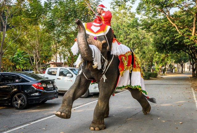 A mahout trains his elephant dressed in a Santa Claus costume before a gift presentation to schoolchildren during Christmas celebrations in Ayutthaya on December 23, 2019. Wearing red and white hats and a string of bells, Thai elephants passed out Christmas gifts to hundreds of schoolchildren on Monday despite growing criticism over using the animals in performances. The annual festive event is organised by a nearby elephant park, whose mahouts or handlers started in the early morning dressing the animals. Thailand is largely Buddhist but decorative celebrations around Christmas are common especially at big name malls. In addition to Santa Claus hats and reindeer bells the elephants were outfitted with strands of white rope at the top of their trunks to resemble a white beard. (Photo by Mladen Antonov/AFP Photo)