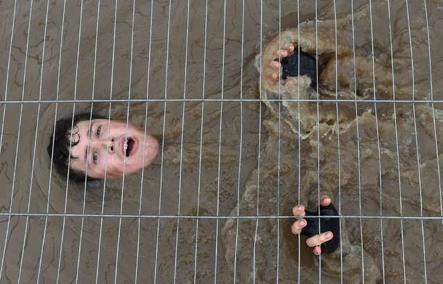 "A participant takes on ""Cage Crawl"" during Tough Mudder London South at The Matterley Bowl in Winchester, Hampshire on October 25, 2014. Tough Mudder is a 10-12 mile obstacle course designed to test all-around strength, stamina, teamwork, and mental grit. (Photo by Joe Giddens/PA Wire)"