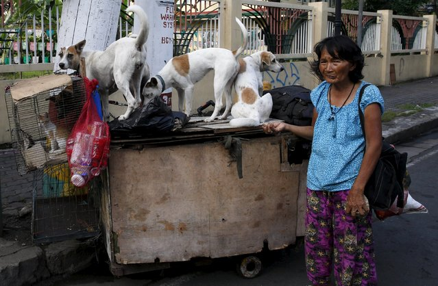 Homeless woman Elena Sevilla poses with her four pet dogs and cats aboard her cart before heading out to collect recyclable materials in Manila October 15, 2015. (Photo by Erik De Castro/Reuters)