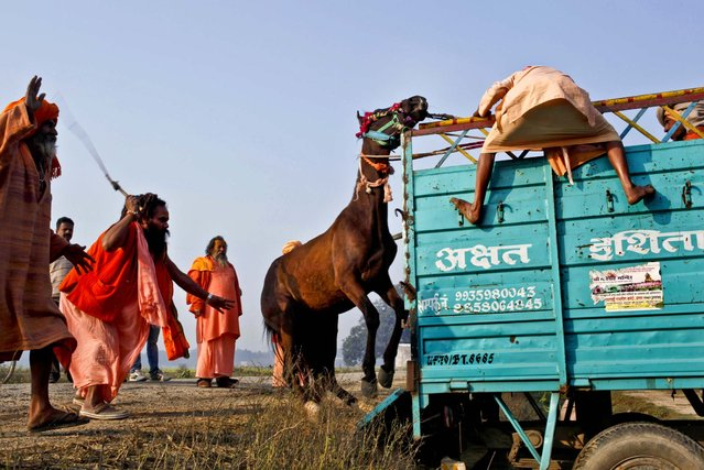 Hindu holy men try to load their horse on to a truck before leaving from Allahabad at the end of Maha Kumbh festival in India, February 27, 2013. (Photo by Rajesh Kumar Singh/Associated Press)