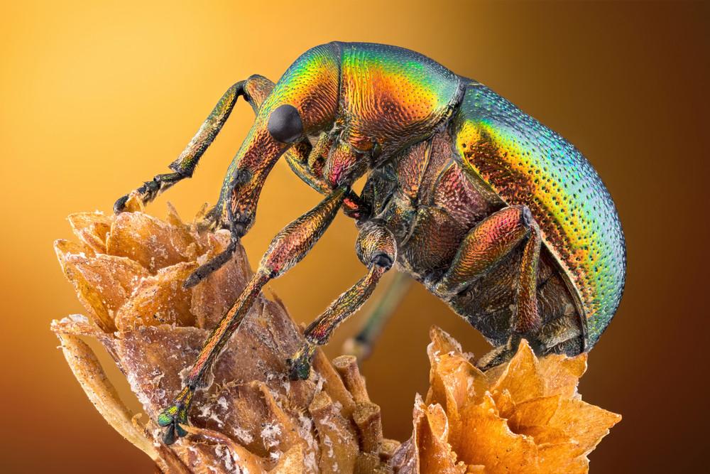 Nikon Small World Photomicrography 2020
