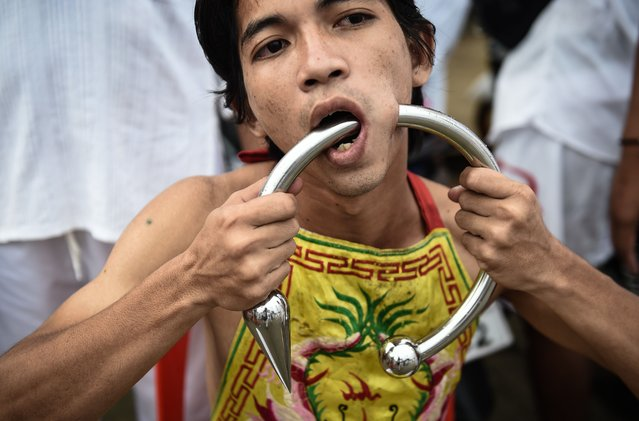 A devotee of the Nine Emperor Gods is seen with a large metal ring through his cheek during the annual Phuket Vegetarian Festival in the southern province of Phuket on October 3, 2016. (Photo by Lillian Suwanrumpha/AFP Photo)