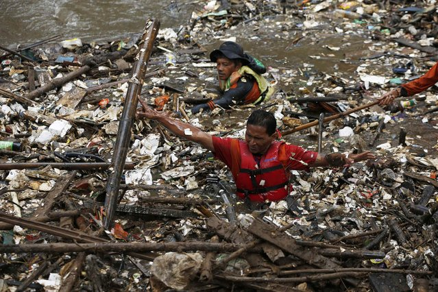 Volunteers clear rubbish from the Ciliwung River in the Jatinegara district of Jakarta, December 3, 2014. (Photo by Reuters/Beawiharta)