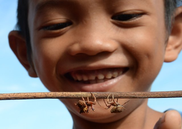This photo taken on November 2, 2015 shows a child watching spiders fight – a local children's pastime – in Tacloban City, Leyte province, central Philippines, two years after typhoon Haiyan devastated the city. The local pastime is played by placing two spiders on opposing ends of a stick, with the intention that the two arachnids will battle each other. The winning spider is declared when its opponent drops off the stick or runs away. (Photo by Ted Aljibe/AFP Photo)