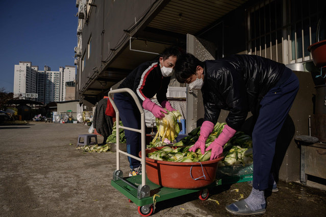 """In photo taken on November 29, 2020 relatives of Lee Young-ja collect cabbages behind her apartment to make kimchi, a traditional communal process known as """"kimjang"""", at her home in the eastern port city of Donghae. (Photo by Ed Jones/AFP Photo)"""