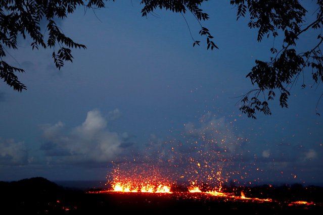 Lava erupts from a fissure on the outskirts of Pahoa during ongoing eruptions of the Kilauea Volcano in Hawaii, U.S., May 14, 2018. (Photo by Terray Sylvester/Reuters)