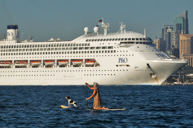 A woman paddle boards with her dog as P&O's Pacific Dawn is moored in Sydney Harbour on November 25, 2015 in Sydney, Australia. The maritime event is the first time P&O Cruises have brought their entire fleet of five cruise ships together. (Photo by Brendon Thorne/Getty Images)