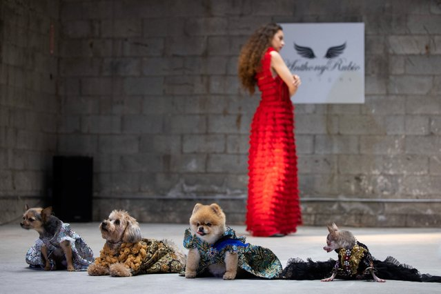 People and dogs take part in Anthony Rubio Designs Womens Wear Canine Couture show as part of New York Fashion Week in Manhattan, New York on February 12, 2021. (Photo by Adam Gray/Action Press/South West News Service)