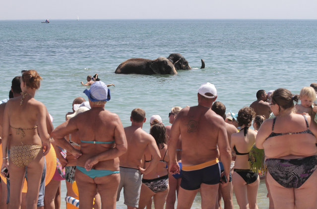 People watch elephants from a local circus taking a regular bath in the waters of the Black Sea on a hot summer day in Yevpatoria, Crimea on August 21, 2018. (Photo by Pavel Rebrov/Reuters)