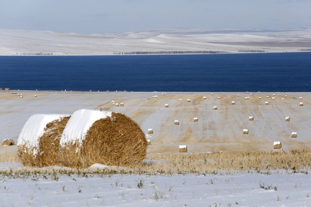 Rolls of hay covered with snow are seen on an agrarian field on the bank of the Belyo Lake in Khakassia region, Siberia, October 18, 2014. (Photo by Ilya Naymushin/Reuters)
