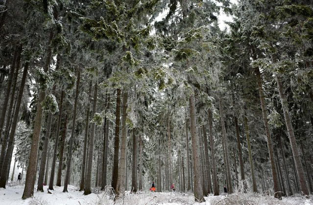 People walk through the snowy forest around the Feldberg mountain, in Germany January 8, 2017. (Photo by Kai Pfaffenbach/Reuters)