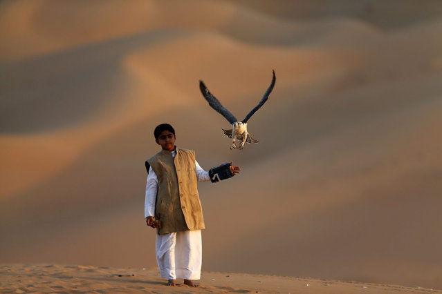 A young Emirati boy looks on as his falcon flies at the Liwa desert, 220 kms west of Abu Dhabi, on the sidelines of the Mazayin Dhafra Camel Festival on December 21, 2013. (Photo by Karim Sahib/AFP Photo)