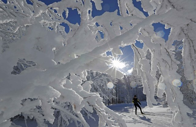 A cross-country skier enjoys a cold and sunny winter's day at the Champ du Feu near Strasbourg, France, January 16, 2017. (Photo by Christian Hartmann/Reuters)
