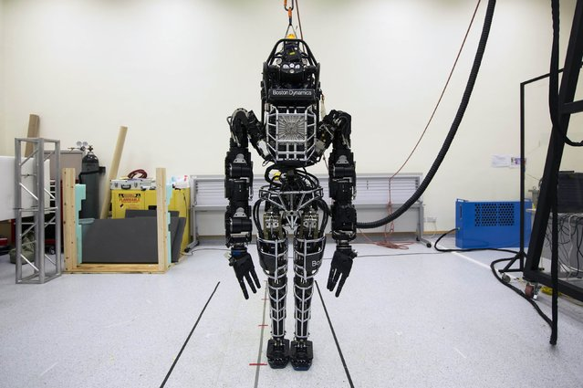 """Bipedal humanoid robot """"Atlas"""", primarily developed by the American robotics company Boston Dynamics, is presented  during a news conference at the University of Hong Kong, in this file photo taken October 17, 2013. Alphabet Inc has put Boston Dynamics, part of its robotics division, up for sale for lack of revenue potential, Bloomberg reported, citing people familiar with the plans. Possible acquirers include the Toyota Research Institute, a division of Toyota Motor Corp., and Amazon.com Inc., which makes robots for its fulfillment centers, according to one person. (Photo by Tyrone Siu/Reuters)"""