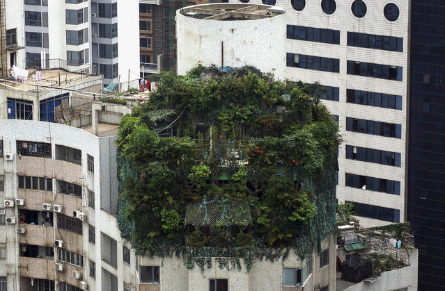 A suspected illegal construction is seen covered by green plants atop a 19-storey residential building in Guangzhou, Guangdong province April 11, 2014. (Photo by Reuters/China Daily)