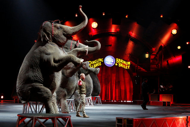 """Elephants perform during Ringling Bros and Barnum & Bailey Circus' """"Circus Extreme"""" show at the Mohegan Sun Arena at Casey Plaza in Wilkes-Barre, Pennsylvania, U.S., April 30, 2016. (Photo by Andrew Kelly/Reuters)"""