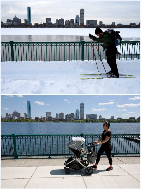 A combination picture shows a cross-country skier making his way along the Charles River past the Boston skyline following a winter blizzard in Cambridge, Massachusetts, United States January 28, 2015 (top), and a woman pushing a baby stroller in the same location, June 10, 2015. (Photo by Brian Snyder/Reuters)