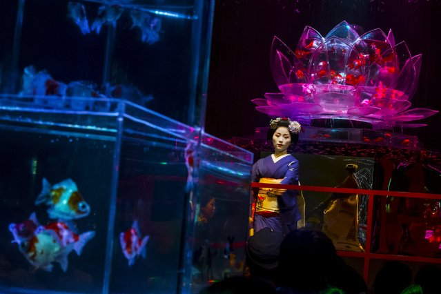 A Maiko, an apprentice geisha, performs a traditional dance in front of a tank with goldfish at the Art Aquarium exhibition in Tokyo July 27, 2015. (Photo by Thomas Peter/Reuters)