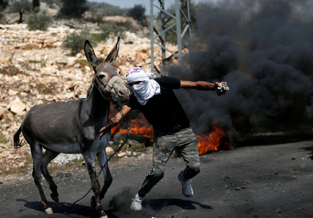 A Palestinian protester tries to push a donkey away from the the scene of clashes with Israeli troops following a protest against the near-by Jewish settlement of Qadomem, in the West Bank village of Kofr Qadom near Nablus August 25, 2017. (Photo by Mohamad Torokman/Reuters)