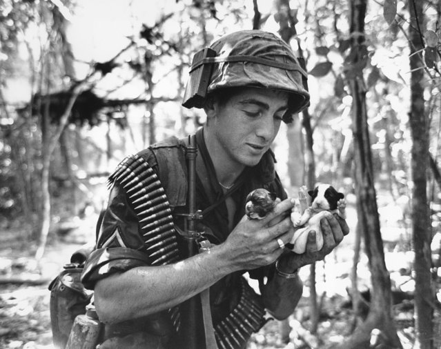 A paratrooper of the U.S. Army's 173rd Airborne Brigade holds puppies found during an allied task force search for enemy in Viet Cong-infested D zone jungle in South Vietnam on July 7, 1965. (Photo by AP Photo)