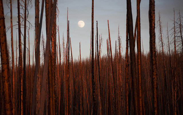 """Silence Voice: Sunset time, a peaceful burnt woods just surround you quietly. Together with your heart beating, you can feel the smooth breeze and hear the sounds of emerging exuberance underneath. The perfect ending is in the endless. The picture was taken in Yellowstone National Park. Turning themselves into such strong remainders, the woods have given hopes to their next generation through a wildfire"". (Photo and comment by Chaoying Zhao/National Geographic Photo Contest via The Atlantic)"