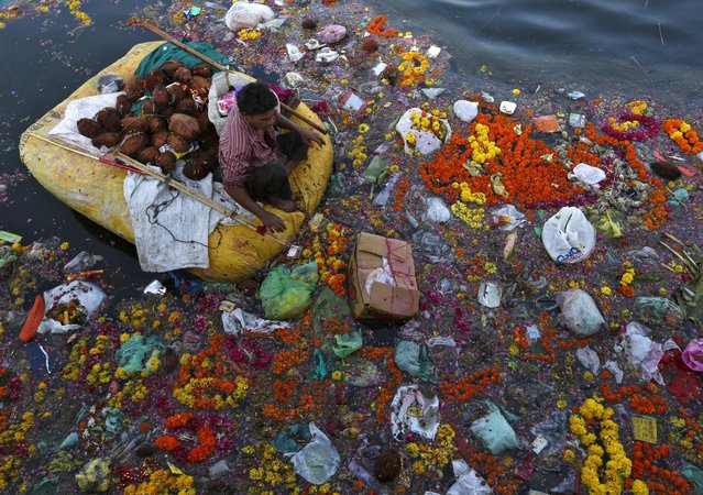 A man collects coconuts and other items thrown as offerings by worshippers in the Sabarmati river, a day after the immersion of idols of the Hindu god Ganesh, the deity of prosperity, in Ahmedabad, India, September 28, 2015. (Photo by Amit Dave/Reuters)