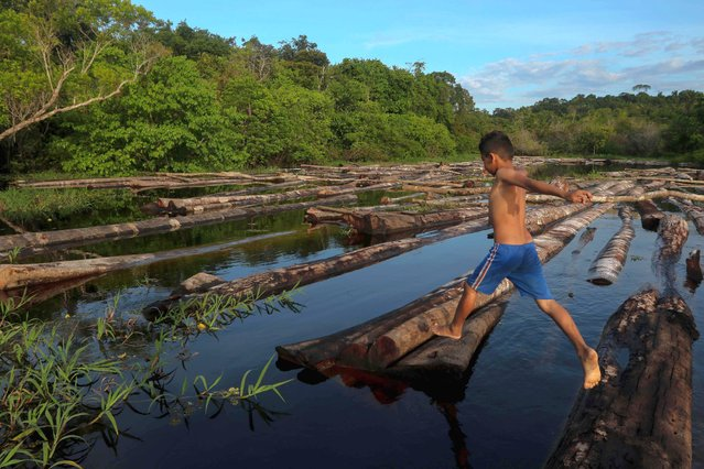 A boy jumps over logs seized by the Amazon Military Police at the Manacapuru River in Manacupuru, Amazonas State, Brazil on July 16, 2020. The Amazon Military Police seized on Thursday about 900 logs of wood cut from the Amazon rainforest by illegal loggers. (Photo by Ricardo Oliveira/AFP Photo)