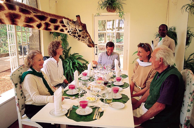 The World S Only Giraffe Hotel In Kenya