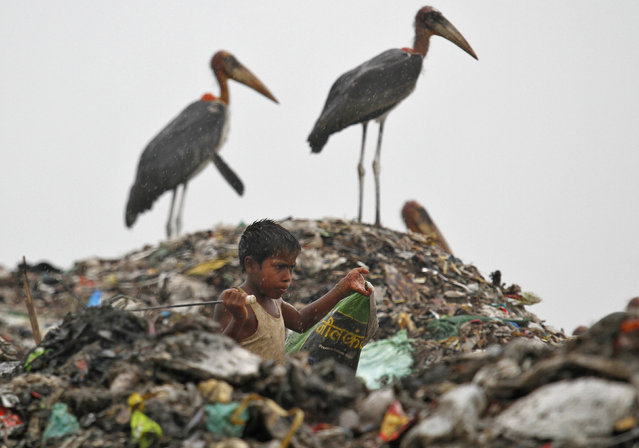 A scavenger, surrounded by a flock of Greater Adjutant birds, collects plastic for recycling at a dump site in the northeastern Indian city of Guwahati June 5, 2013. (Photo by Utpal Baruah/Reuters)