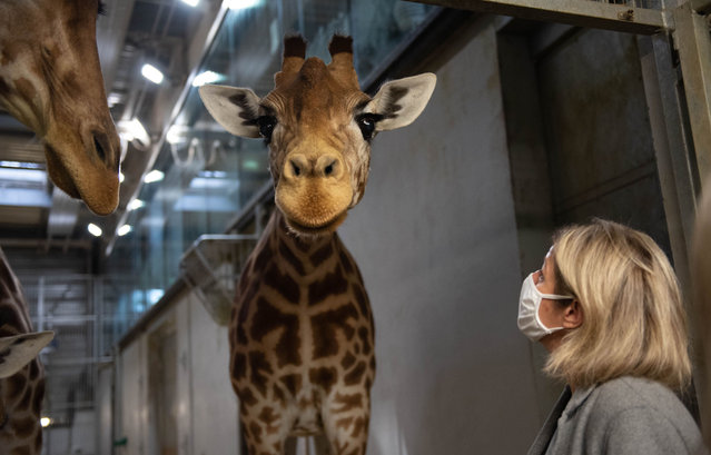 Barbara Pompili, Minister of Ecological Transition visit of the structures dedicated to the care, research and conservation of species in the Paris Zoological Park of the National Museum of Natural History on Tuesday, September 29, 2020. (Photo by Jeanne Accorsini/SIPA Press)