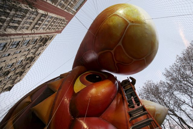 """A worker tends to the """"Skylanders Eruptor"""" balloon before the 89th Macy's Thanksgiving Day Parade in the Manhattan borough of New York, November 26, 2015. (Photo by Andrew Kelly/Reuters)"""