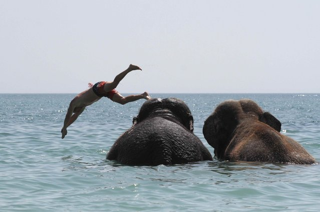 A trainer dives as elephants from a local circus take a regular bath in the waters of the Black Sea on a hot summer day in Yevpatoria, Crimea on August 21, 2018. (Photo by Pavel Rebrov/Reuters)
